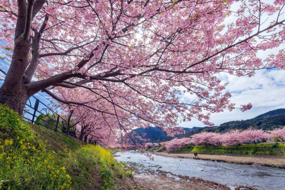 Sungai Kawazu